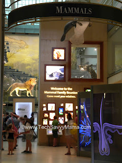 Kleenex Field Trips & Smithsonian National Museum of Natural History- Friday Fave