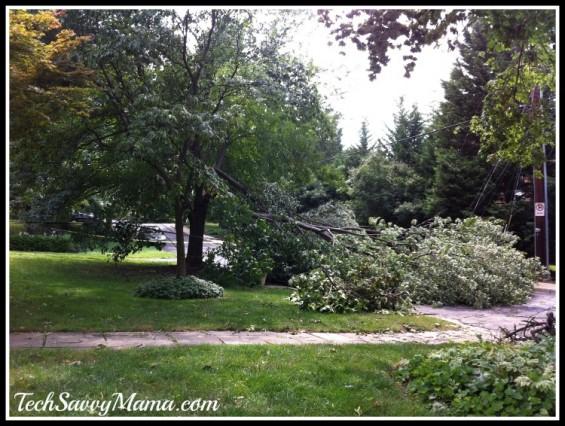 Fallen Tree from Summer Storm I TechSavvyMama.com