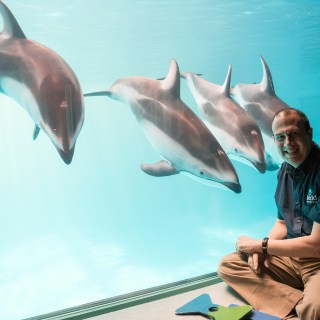 How Do You Become a Dolphin Trainer? Join Us for #STEMchatOnAir April 29 at 2pm ET on G+