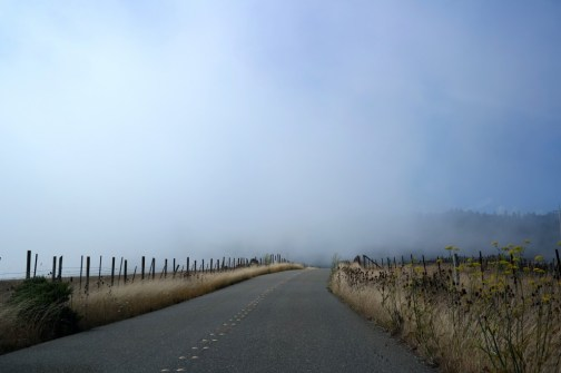 Foggy Drive en Route to the Northern California Coast