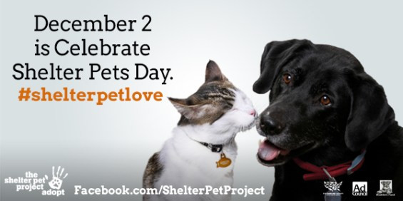 2014 Gifts that Give Back- TheShelterPetProject.org