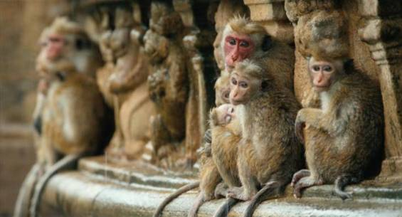 The Sisters from Disneynature Monkey Kingdom