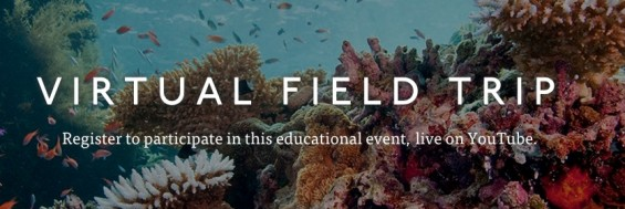 Visit Palau's Coral Reefs During The Nature Conservancy's Virtual Field Trip