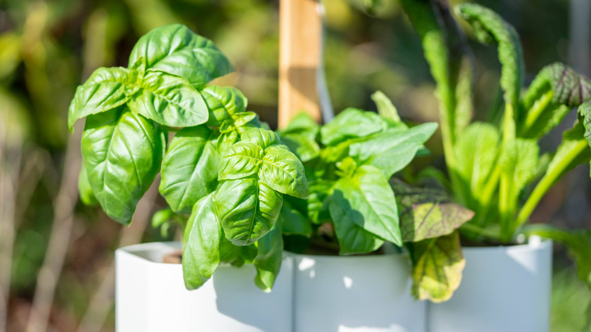 Lilo, Ihr smarter Indoor-Garten im (langzeit) Test