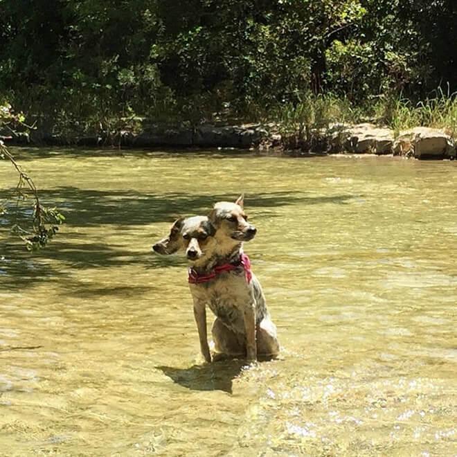 panorama dogs