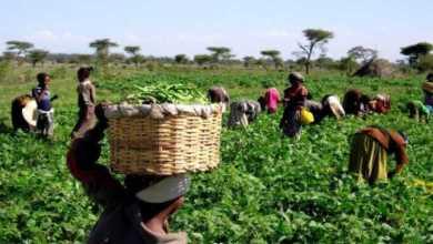 Photo of Kenya's Agritech Startup Farmshine Raises US$ 250,000 Funding