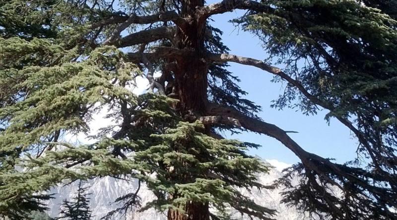 Chitral Gol National Park - Tech Urdu. Mystery of Earth's Missing Nitrogen Solved