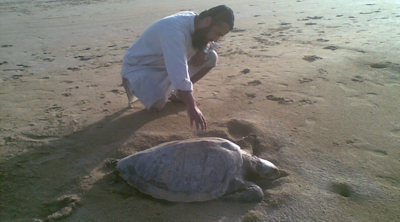 Turtles in Pakistan Near Extinction - Tech Urdu