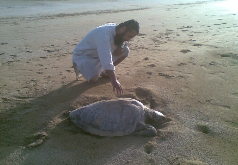 Turtle Species in Pakistan Near Extinction - Tech Urdu