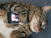 Cat plays with smartphone