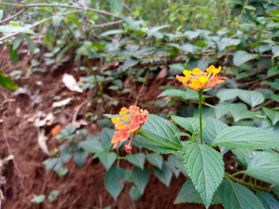 TECNO Spark 5 photo 6