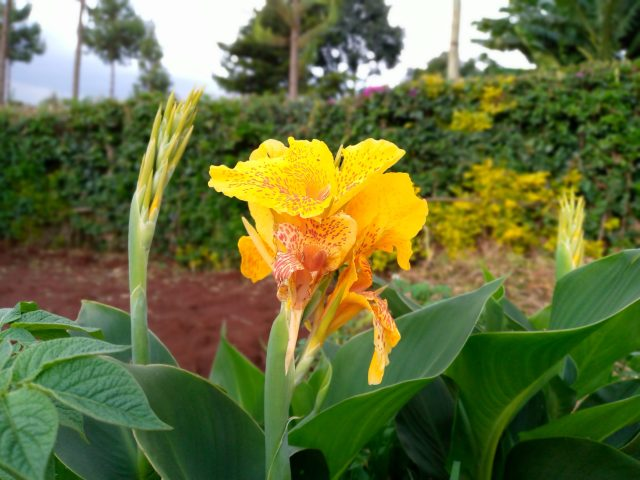 TECNO Spark 5 photo bokeh