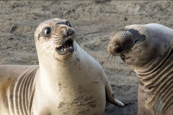 Imagem de uma foca.