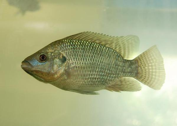 Um peixe do rio.