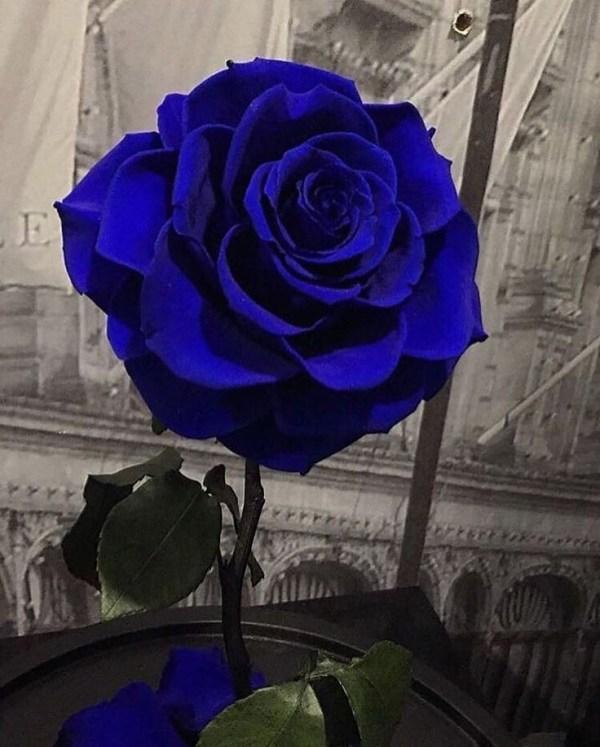 o azul bonito