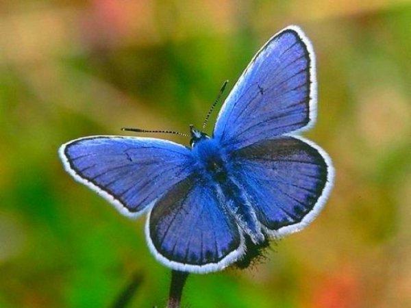 blue é a nova cor