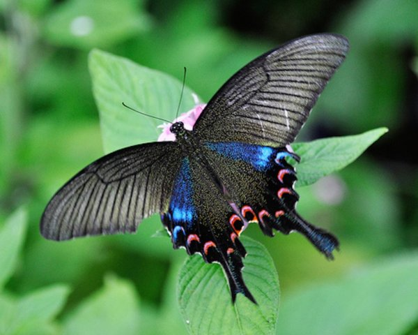linda borboleta e linda