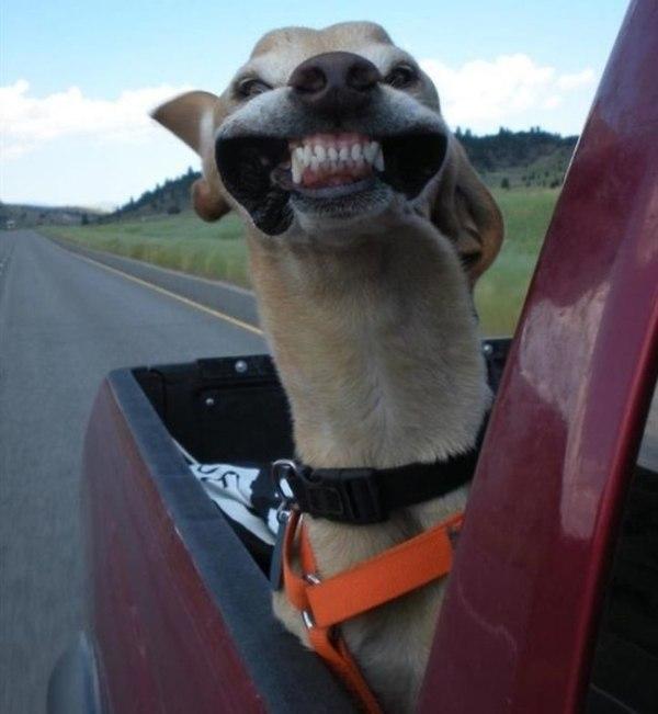 Imagem aleatória de cachorro.