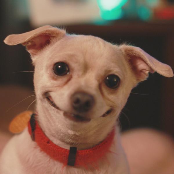 Cachorro comum lindo sorriso.