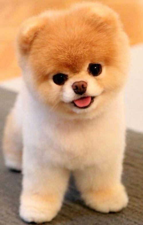 Imagem de cachorro peludo
