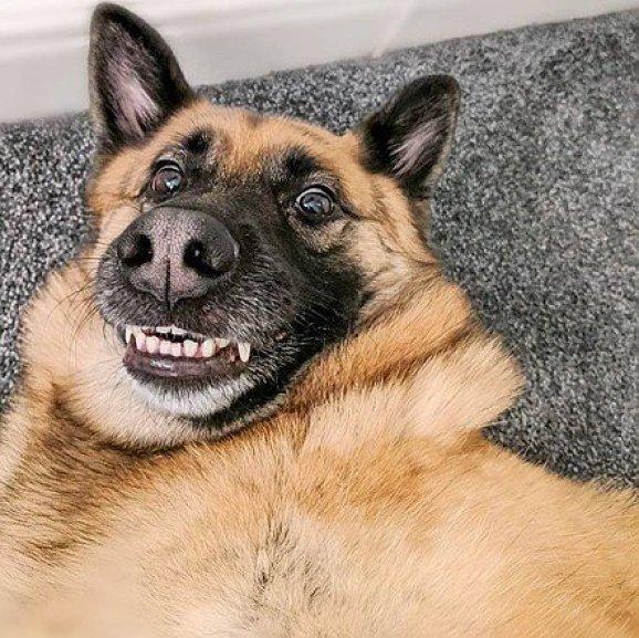 cachorro sorridente.