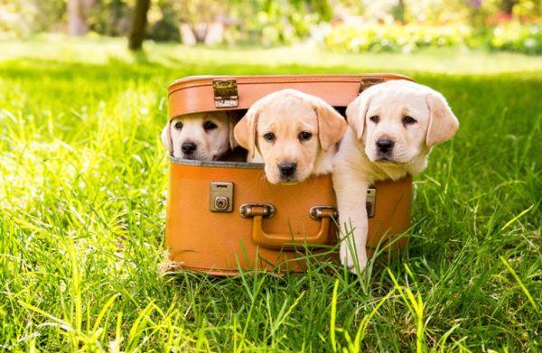 Imagens de cachorros fofos