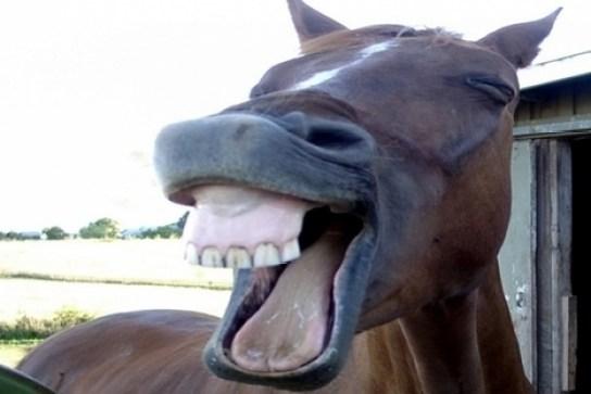 Fotos engraçadas de animais Olha o burro rinchando