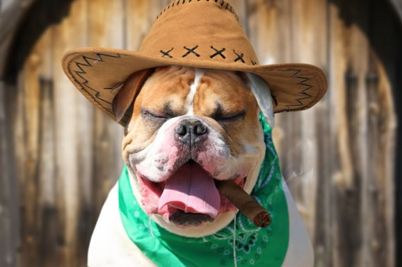 Imagem do dog engraçado