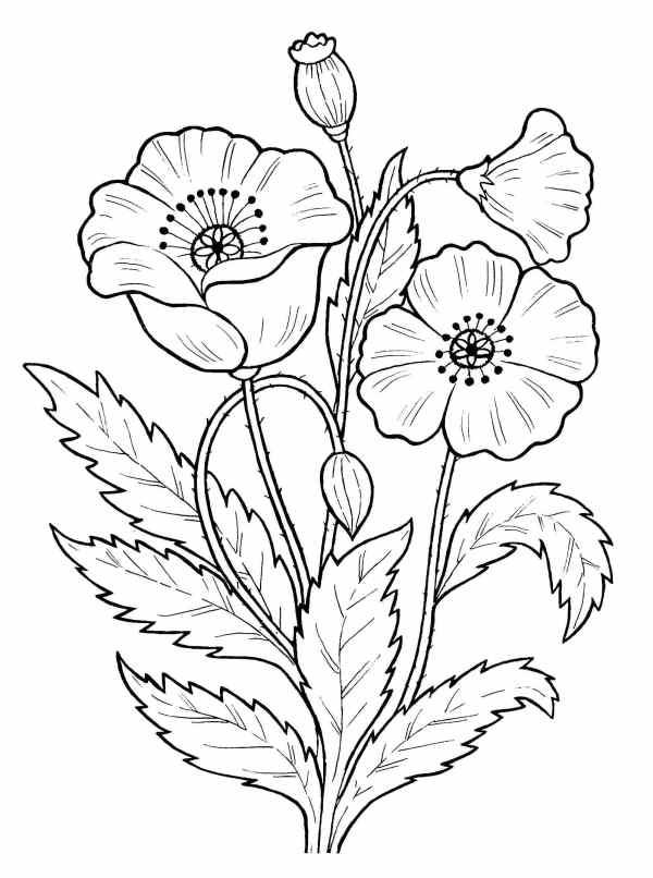 Flores para colorir.
