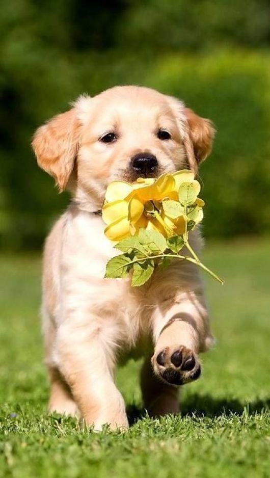 Foto de cachorro tumblr com uma flor