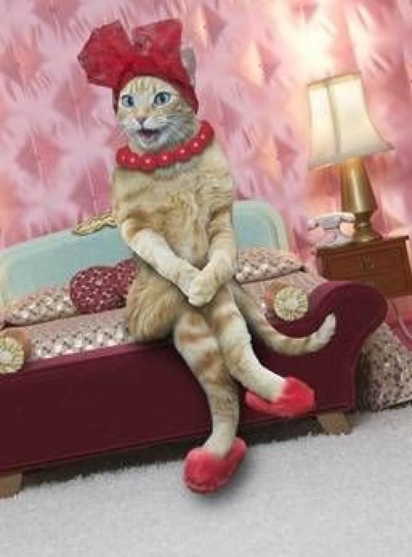 Fotos engraçadas de animais gatinho sentado