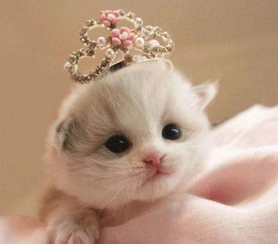 gatinha princesa