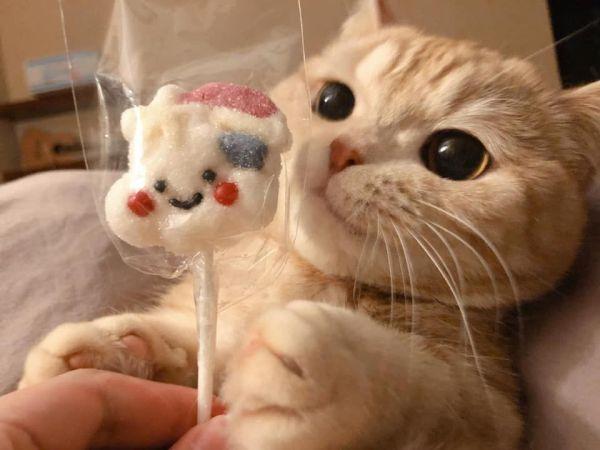 gatinho com doce