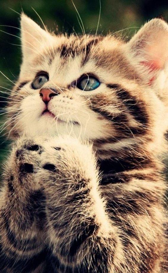 gatinho orando
