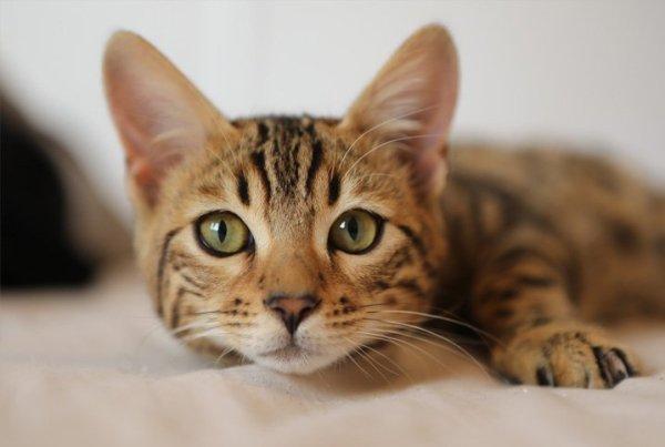 Gato lindo de mais fofo e adorável