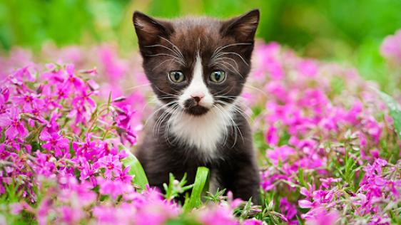 gato no meio das flores