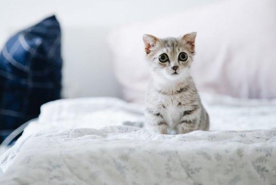 gato super pequeno