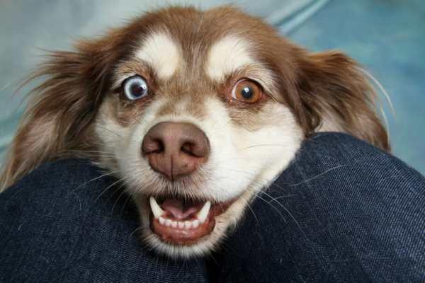 Imagem de cachorro ansioso