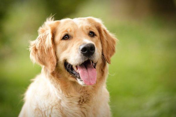 Imagens de cachorros