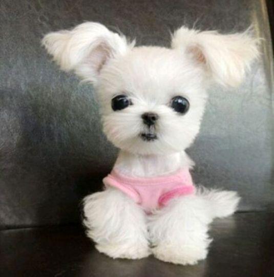 Foto de cachorrinha linda e fofa Moça linda