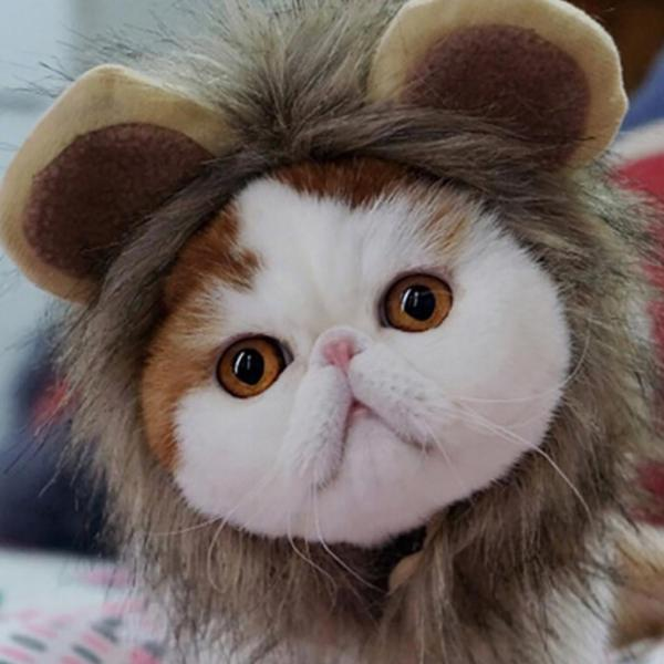 Olha gente eu sou um leão.