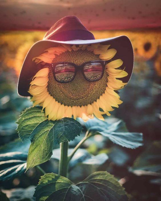 papel de parede engraçado com flor