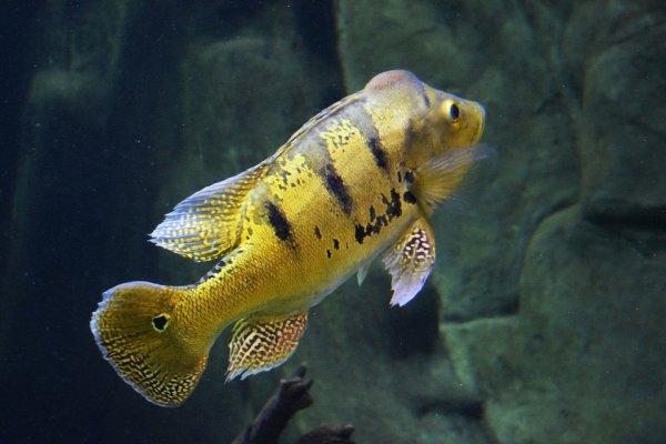 lindo peixinho.