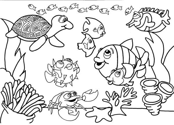Vários peixinhos.