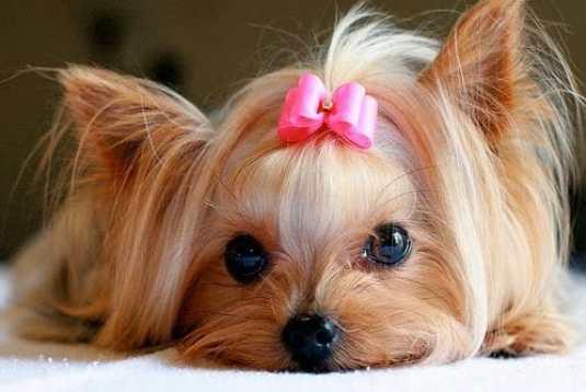 Princesa fotos de cachorros