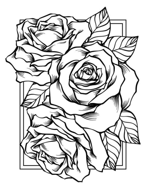 Imagem de flores lindas.