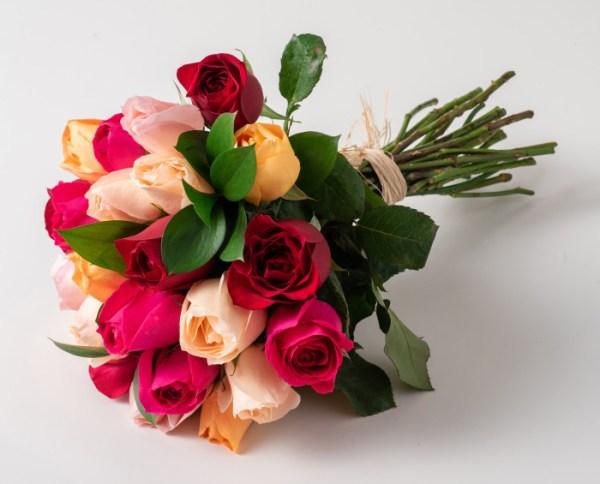 rosa linda de todas cores