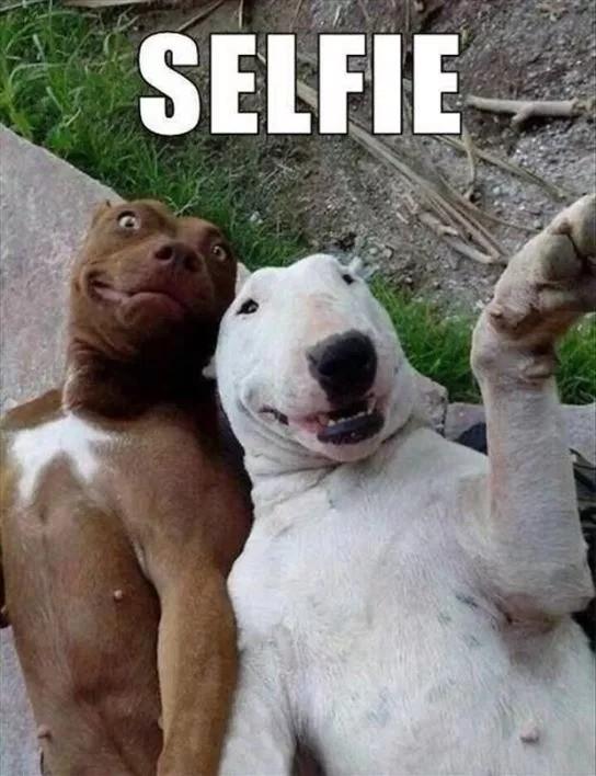 Fotos engraçadas de animais Amigos cachorros