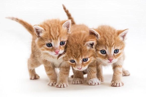 tres gatinhos