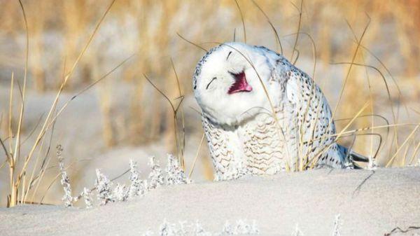 Uma coruja  feliz.